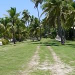 Hammocks & Palm Trees