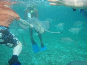 Hol Chan Marine Reserve (Shark Ray Alley), Ambergris Caye, Belize
